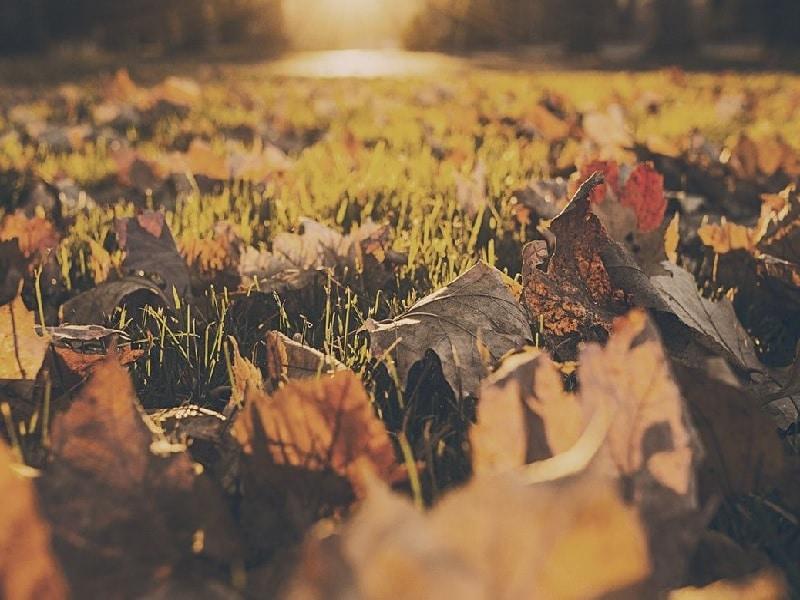 Top 7 Best Cordless Leaf Blowers