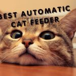 Review 5 Best Automatic Timed Cat Feeder for Your BEST FRIEND
