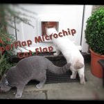 SureFlap Microchip Cat Flap Reviews – Should You Need A Microchip Cat Flap?