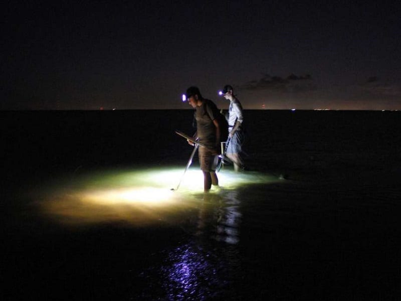 Best Flounder Gigging Lights