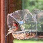 Top 7 Best Window Bird Feeder In 2019